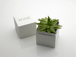 Open succulent gift package in a rigid paperboard box.