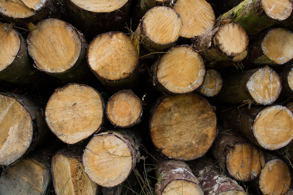 trees, lumber, FSC, forestry, paper, logs, FSC Certified Packaging